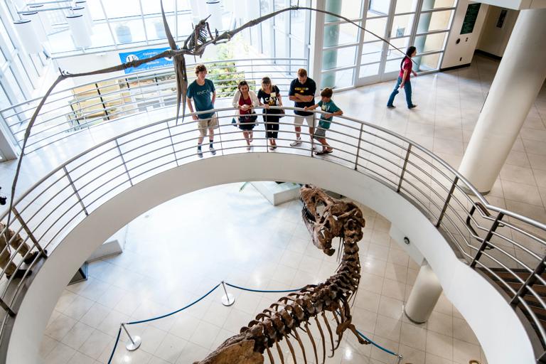 Group admiring the t-rex skeleton